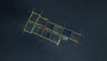 an aerial view of a fish farm
