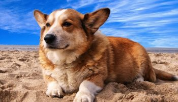 a dog lying down on a sandy beach
