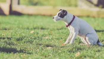 Industry Statistics And Trends [Companion Animal Ownership]