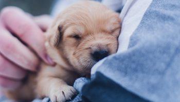 2003 Companion Animal Ownership On Rise U.S.