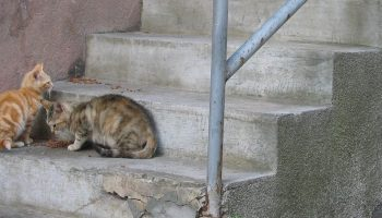 two cats on stone steps