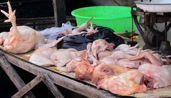 Rising Consumption Of Animal Products In Developing Countries