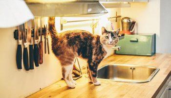a cat walking on a kitchen worktop