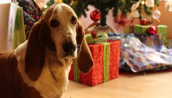 a dog in front of a Christmas tree and presents