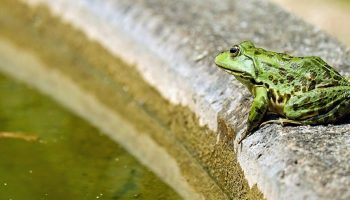 a green frog near some green water