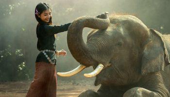 a girl petting an elephant