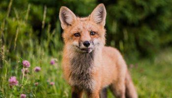 Animal Rights And Human Wrongs