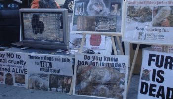 animal rights protest against fur