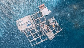 an aerial view of a fish farm in the ocean