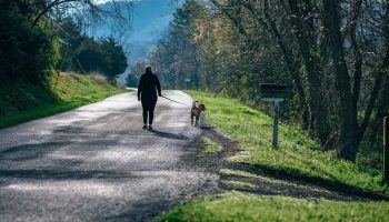 a man walking his dog on a road next to the woods