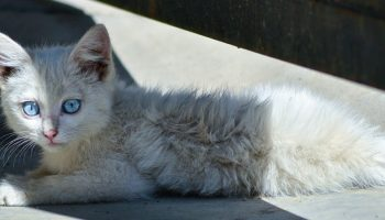 a stray kitten lying outside