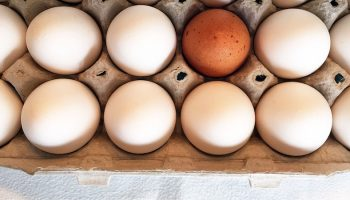 dozen white eggs in a cartoon and one outlying brown egg
