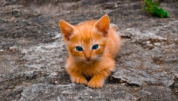 an orange kitten lying outside