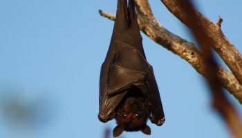 bat hanging upside down from a branch