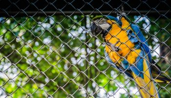 a parrot in captivity