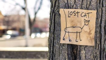 a drawing of a lost cat posted on a tree