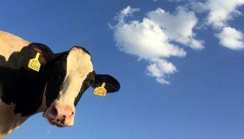 Farm Animal Welfare In The U.S.