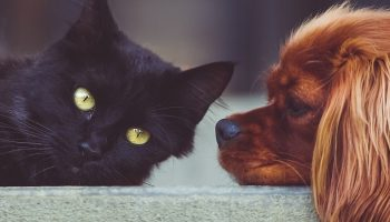a dog lying next to a black cat