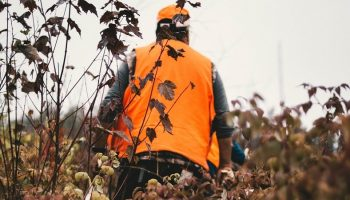 a hunter with an orange hunting vest