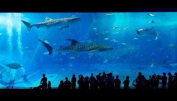 people looking into a large aquarium full of fish