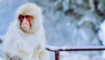 monkey sitting in a snowy climate