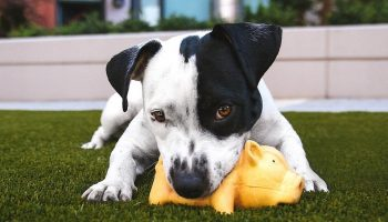 a dog in a garden with a toy in its mouth