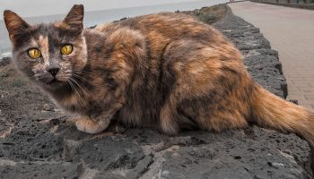 yellow eyed stray cat on a beach