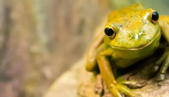 Study Finds No Frogs In Hundred Islands