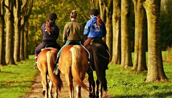 three horse riders going down a pathway