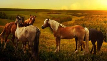 four horses in nature