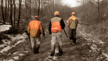 three hunters with orange vests walking down a forest road