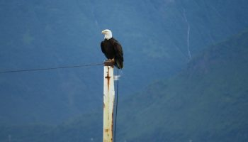 a white tailed eagle sitting on a sign