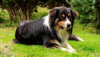 a dog sitting outside