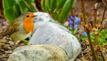 a small robin on a stone outside