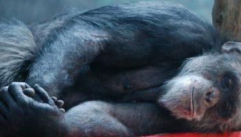 monkey lying down next to a tree