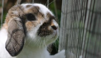 rabbit locked behind a cage