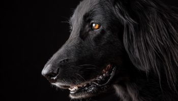 a black dog with a black background