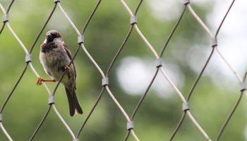 a bird sitting on a chain fence