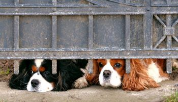 two dogs poking their heads under a metal fence