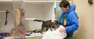 woman working in a cat shelter