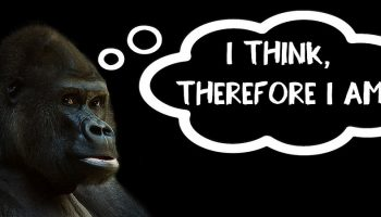 """a gorilla with a thought balloon next to him that says """"I think therefore I am"""""""
