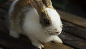 a rabbit on a table