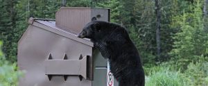 black bear trying to eat from garbage bin