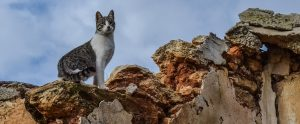 cat standing on a crumpled wall