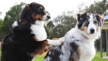 a dog giving therapeutic massage to another dog