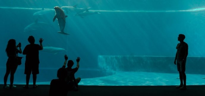 Public Agrees That Visiting Zoos And Aquariums Helps ...