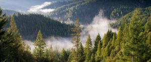fire smoke rising from forests