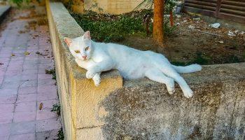 stray white cat lying down in Greek streets