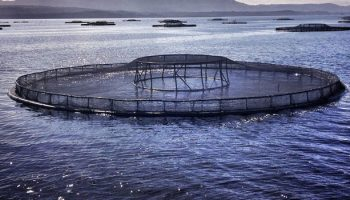 Environmental and Animal Welfare Issues in Food Choice: The Case of Farmed Fish