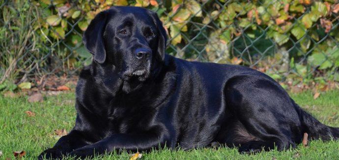 Evaluating Black Dog Syndrome